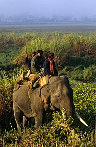 Presenter Valmik Thapar riding on Indian elephant, Kaziranga NP, Assam, India, on location for BBC television prgramme 'Land of the Tiger - Sacred Waters', December 1996  -  Toby Sinclair
