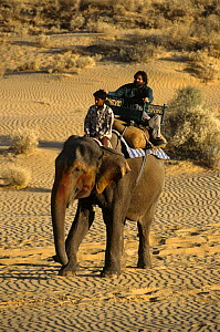 Presenter Valmik Thapar riding on Indian elephant in the Thar desert, Rajasthan, India. On location for BBC television programme 'Land of the Tiger - Deserts', April 1997  -  Toby Sinclair