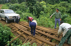 Laying planks to mend bridge to enable vehicle to cross river, Kilum-Ijim Forest Project zone, Bamenda Highlands, North West Province, Cameroon  -  Nigel Bean