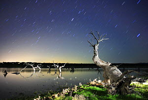 Dead Holm oak trees {Quercus ilex} in lake, at night with star trails in sky, Caceres, Extremadura, Spain  -  Jose B. Ruiz