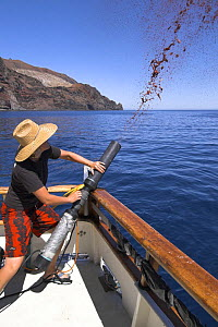 Firing chum slick into the water as bait for Great white shark cage-diving, Guadalupe Island, Mexico (North Pacific) - Mark Carwardine