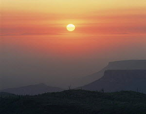 Mesas in the Pacific fog rising above the Vizcaino Desert at sunset with Cardon Cacti (Pachycereus pringlei) in the foreground, Baja California Sur, Mexico, Central America  -  Jack Dykinga