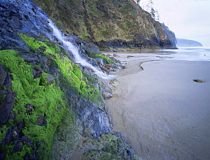 Waterfall  down cliff  onto beach, Cape Lookout State Park, Oregon, USA  -  Kirkendall-Spring