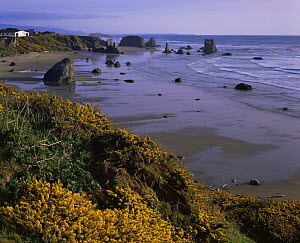 Sea stack studded beach, Bandon, Oregon, USA  -  Kirkendall-Spring