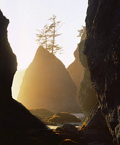 Point of Arches at sunset, Pacific Coast, Olympic NP, Washington, USA  -  Kirkendall-Spring