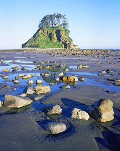 Rocks and tidal pools on Shi Shi Beach, Pacific Coast, Olympic NP, Washington, USA  -  Kirkendall-Spring