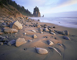 Beach at Mosquito Creek on the Wilderness Coast, Olympic NP, Washington, USA  -  Kirkendall-Spring