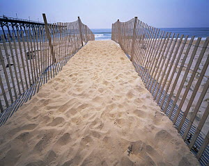 Fenced pathway leading down to the Atlantic Ocean, Carolina Beach, North Carolina, USA  -  Kirkendall-Spring