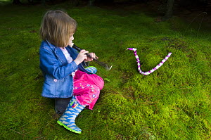 Young girl 'charming' a snake made of Foxglove flowers, Scotland, UK  -  Niall Benvie