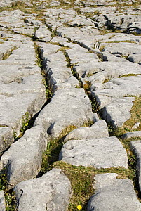 Limestone Pavement, The Burren, County Clare, Republic of Ireland  -  Adrian Davies