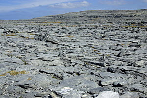 The Burren, County Clare,  Republic of Ireland, spring.  -  Adrian Davies