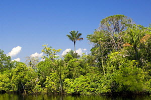 Rainforest along the Rio Negro river, Amazon basin, Brazil  -  Mark Carwardine