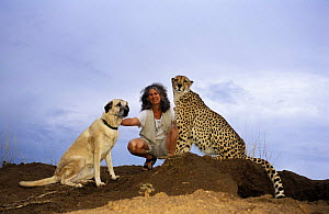 Dr. Laurie Marker (founder of Cheetah Conservation Fund) with Cheetah (Acinonyx jubatus) and Anatolian Shepherd dog. Namibia, East Africa. Ref: Cheetah Conservation Project - Andrew Harrington