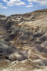 Blue Mesa badlands formations, Painted Desert and Petrified Forest, Arizona, USA May 2007  -  Philippe Clement