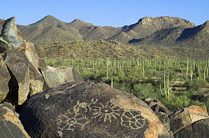 Rock art in the Tucson Mountains, created by the Hohokam Indians, showing geometrical shaped petroglyphs, Saguaro NP, Arizona, USA May 2007  -  Philippe Clement
