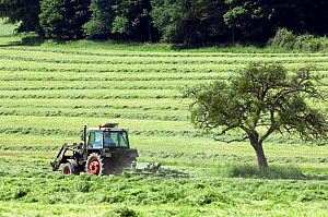 Tractor with mower cutting grass for hay, Luxembourg  -  Philippe Clement