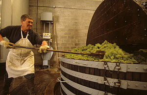 Man working at traditional wine press, M. Coquillette Champagne producer in Chouilly, C�te de Blancs vineyard, Champagne country, France - Eric Baccega