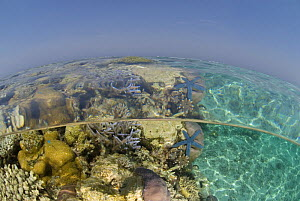 Split-level photograph of coral reef shallows, Rowley Shoals, Western Australia  -  Jurgen Freund