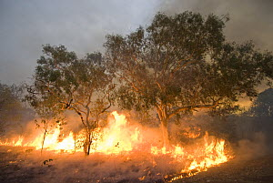 Bushfire in the outback. Derby, Western Australia - Jurgen Freund