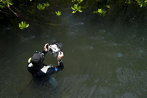 Photographer Jurgen Freund photographing box jellyfish (Chironex sp.) in the mangroves, Australia - Jurgen Freund