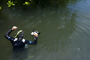 Photographer Jurgen Freund photographing box jellyfish (Chironex sp.) in the mangroves, Australia. - Jurgen Freund