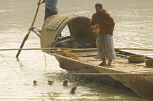 Traditional fishermen on boat using Smooth indian river otters {Lutra perspicillata} to catch fish,  rewarding otters by feeding them with fish, Ganges/Brahmaputra delta, Sunderbans, Bangledesh - Warwick Sloss