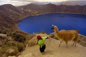 Quichua Indian child with her llama {Lama glama} Quilatoa Crater Lake, Andes, Ecuador - Pete Oxford