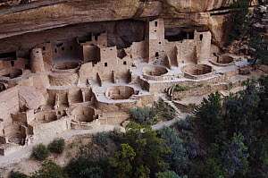 Cliff Palace dwelling, ruined homes of the ancient pueblo people, Mesa Verde National Park, Colorado, USA, September 2007  -  Rolf Nussbaumer