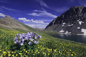 Clear Lake and wildflowers in alpine meadow, Blue Columbine {Aquilegia coerulea} and Alpine Avens flowers, Ouray, San Juan Mountains, Rocky Mountains, Colorado, USA, July 2007  -  Rolf Nussbaumer