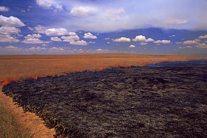 Savanna grassland fire showing fire stopping at path which acts as fire break, Kenya, East Africa - Anup Shah