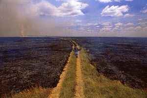 Savanna grassland fire showing fire stopping at track which acts as fire break but has been crossed in places, Kenya, East Africa  -  Anup Shah