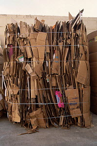 Bales of cardboard ready for recycling, USA, 1997  -  Shattil & Rozinski