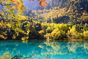 Trees and reflection in lake, Juizhaigou National Reserve, UNESCO world heritage Site, Sichuan province, China, October 06, 'Wild China' series  -  Gavin Maxwell
