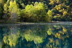 Trees and reflection in water, Juizhaigou national reserve, UNESCO world heritage site, Sichuan province, China, October 06, 'Wild China' series  -  Gavin Maxwell