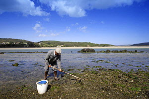 Man hoeing the mudflats in Ria de Corme y Laxe Estuary, Costa da Morte, Galicia, Spain  -  Jose B. Ruiz
