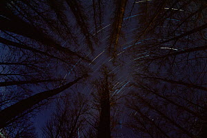 Star trails above forest at night, Hungary.  -  Bence  Mate