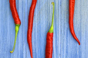 Red chilli peppers / chillies (Capsicum annum acuminatum) freshly harvested on pale blue background - Gary K. Smith