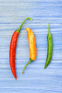 Yellow red & green chilli peppers / chillies (Capsicum annum acuminatum) freshly harvested on pale blue background - Gary K. Smith