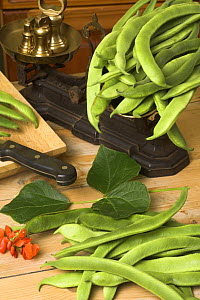 Home grown Runner Beans (Phaseolus sp.) in traditional country kitchen with rustic weighing scales, England, UK  -  Gary K. Smith