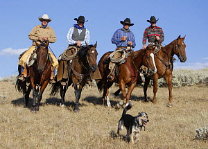 Four cowboys riding with cowdog, Flitner Ranch, Shell, Wyoming, USA, model released  -  Carol Walker