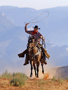 Cowboy running with rope lassoo in hand, Flitner Ranch, Shell, Wyoming, USA, model released  -  Carol Walker