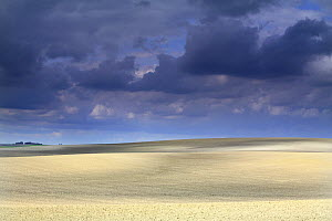 Cultivated fields with dark storm clouds, Dos Hermanas, Seville, Spain  -  Jose B. Ruiz