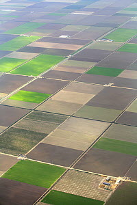 Aerial view of cultivated farmland in strips, Seville, Spain  -  Jose B. Ruiz