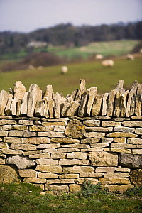 Cotswold stone wall and countryside on the Cotswold Way, Broadway Tower, Gloucestershire, UK - Nick Turner