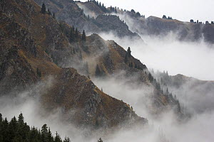Mist shrouds the Tian Shan (Heavenly Mountains) in Xinjiang Province, North-west China. September 2006, BBC ^Wild China^ series  -  George Chan