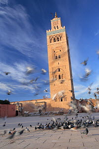 Pigeons in the courtyard of the Toutoubia Mosque in Marrakech, Morocco December 2007  -  Juan Manuel Borrero