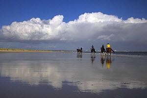 Horse riders on Shell Bay, Studland, Dorset, UK  -  Peter Lewis