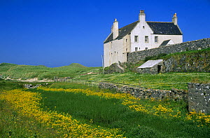 House beside meadow with flowering Monkey flower {Mimulus guttatus} Balnakeil, Sutherland, Scotland, UK - Duncan Mcewan