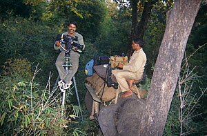 Photographer EA Kuttapan filming Tigers from a specially adapted high tripod / stool, Elephant also being used for filming, Bandhavgarh NP, India  -  E.A. KUTTAPAN