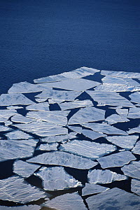 Aerial view of sea ice floe breaking up in summer, Admiralty Inlet, Canadian High Arctic, June 2000  -  Sue Flood